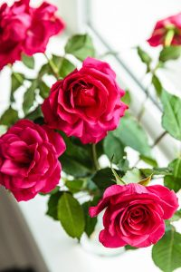 Hair Care Tips : Along with skin, Rose Water also benefits these 5 ways